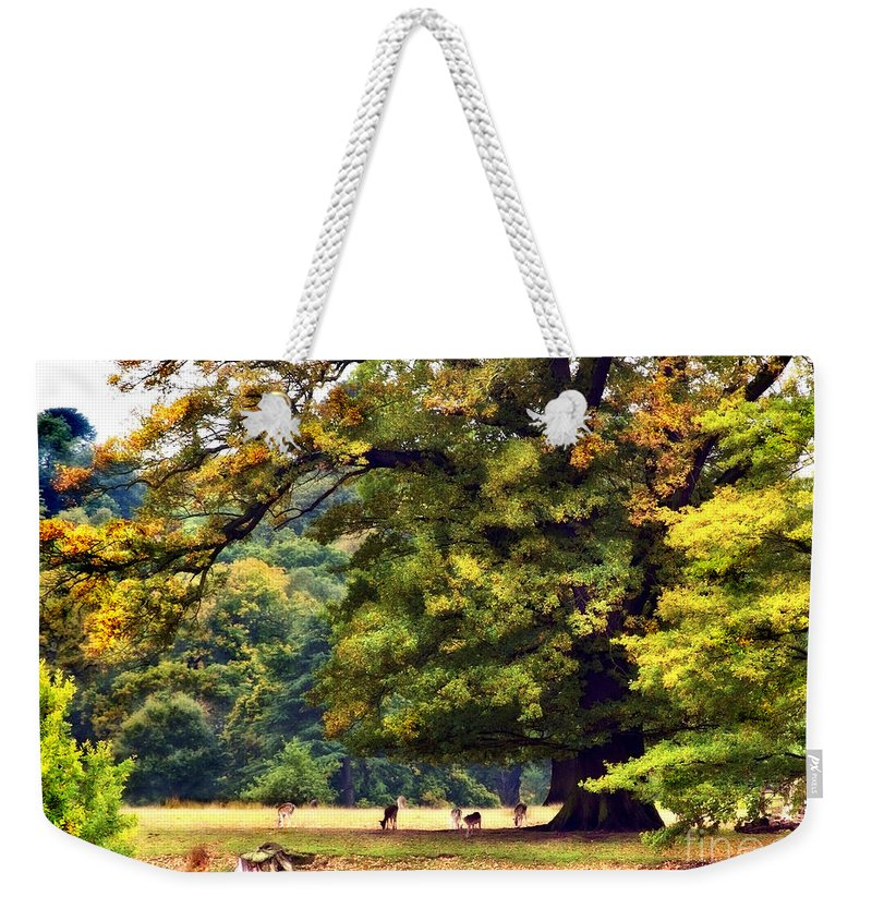 Landscape Weekender Tote Bag featuring the photograph Landscape Under A Big Oak In Autumn by Linsey Williams