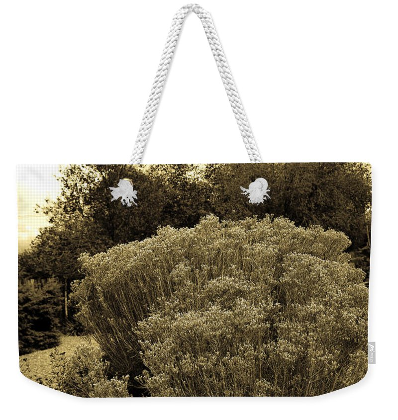 Shrub Weekender Tote Bag featuring the photograph Shrub In Santa Fe by Madeline Ellis