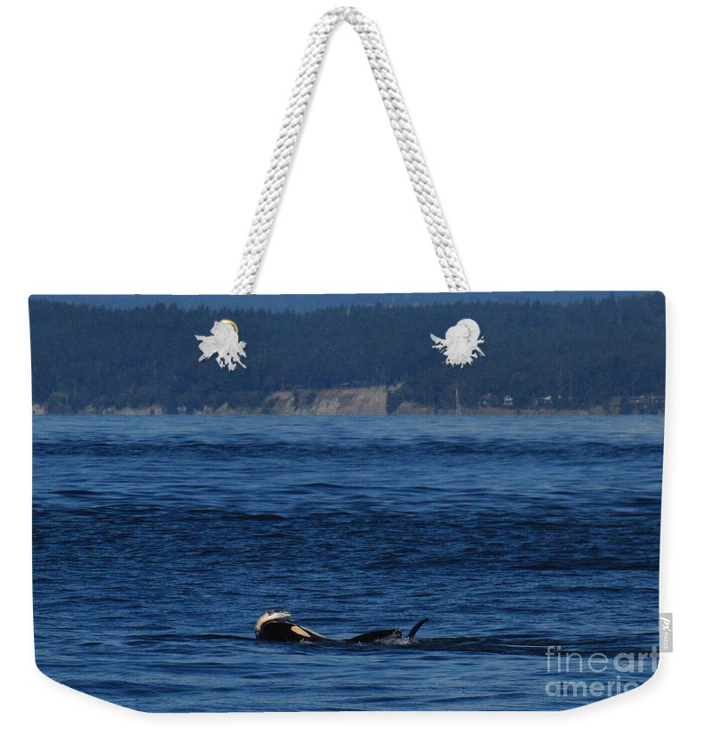 Southern Resident Weekender Tote Bag featuring the photograph Southern Resident Orcas And Salmon Off The San Juan Islands Playing With Salmon by Mr Pat Hathaway Archives