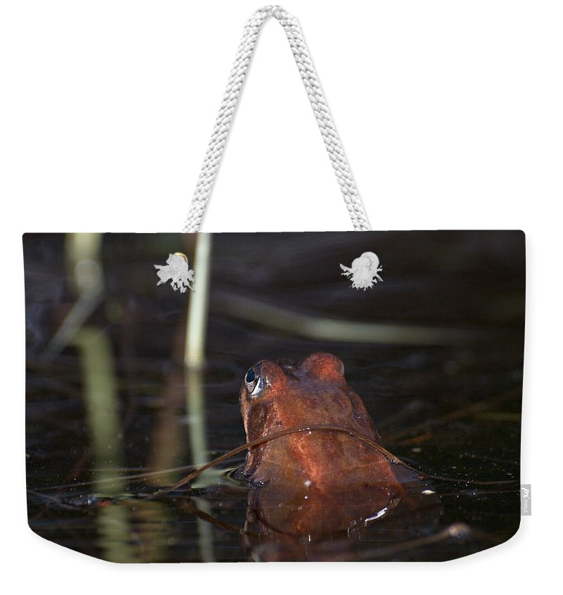 Lehtokukka Weekender Tote Bag featuring the photograph The Common Frog 2 by Jouko Lehto