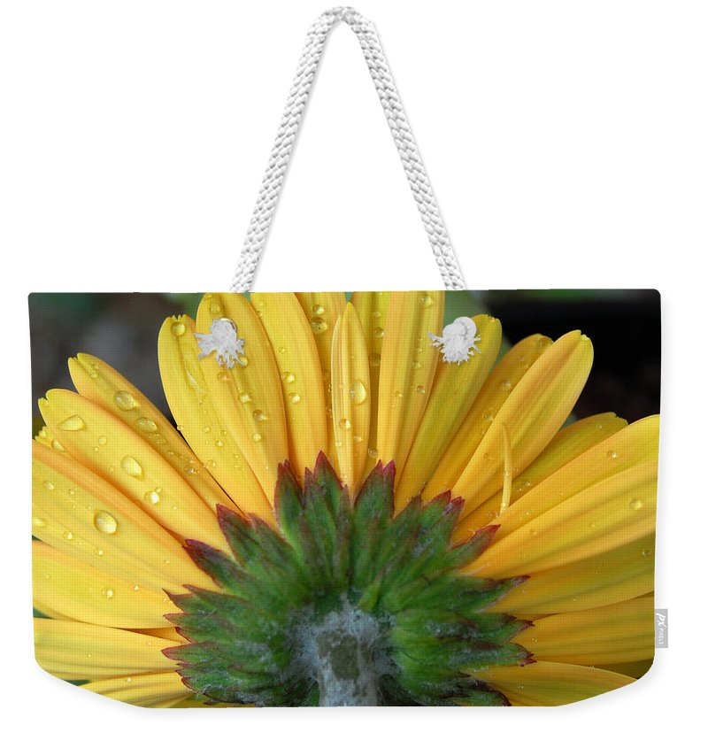 Flowers Weekender Tote Bag featuring the photograph Water Drops On Gerbera Daisy by Amy Fose