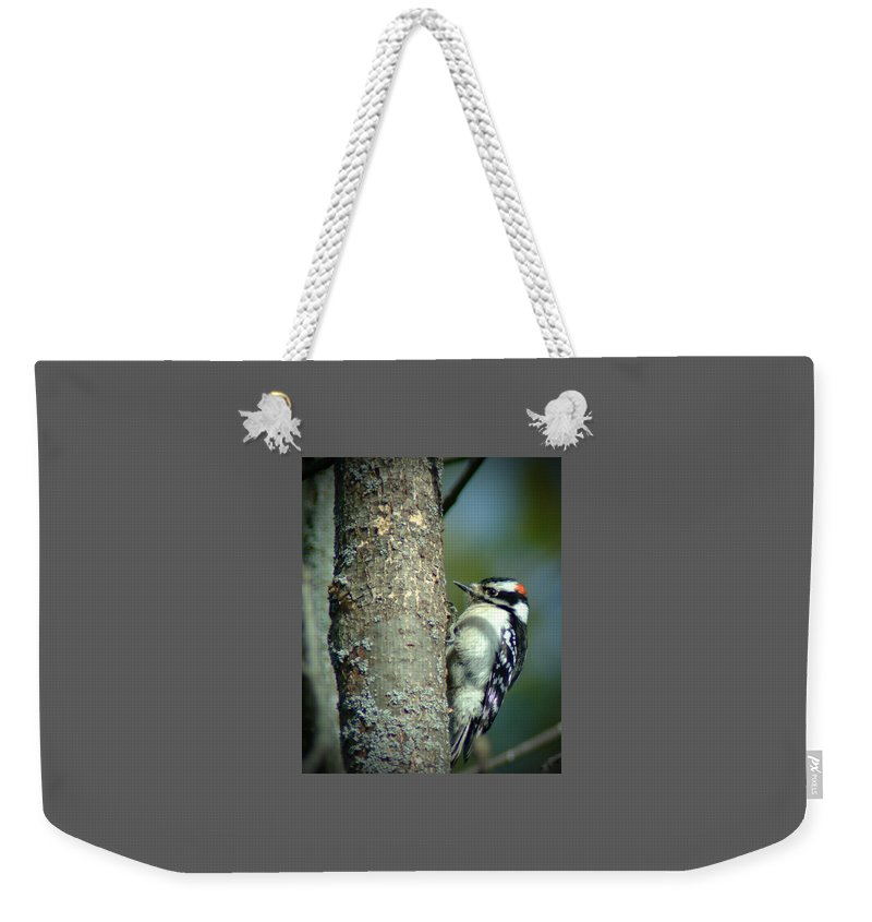 Woodpecker Weekender Tote Bag featuring the photograph 032309-19 by Mike Davis