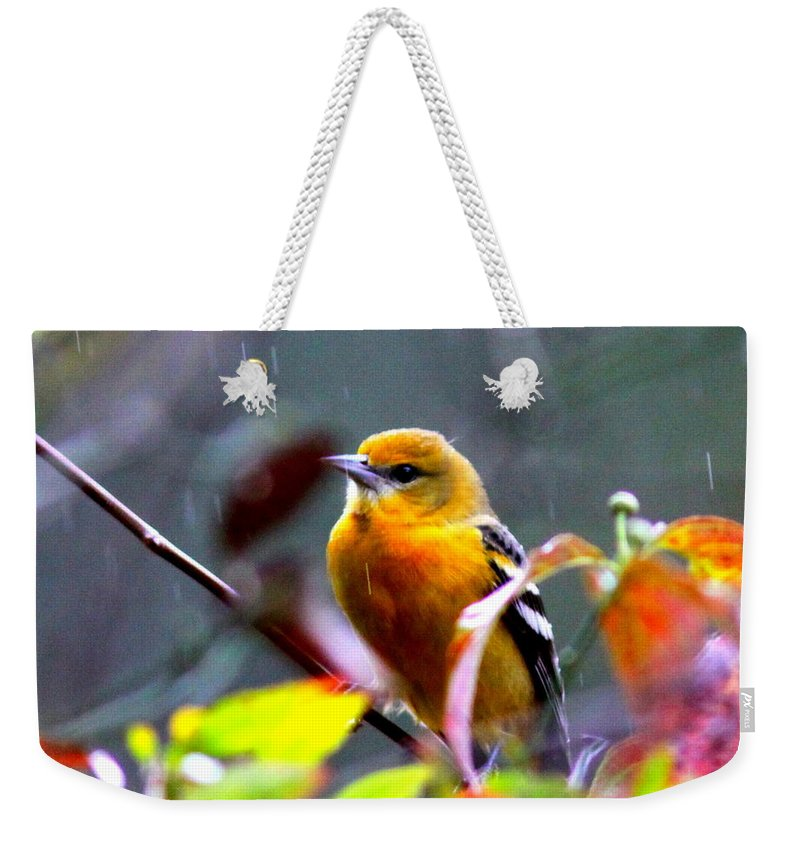 Baltimore Oriole Weekender Tote Bag featuring the photograph 0651 - Baltimore Oriole by Travis Truelove
