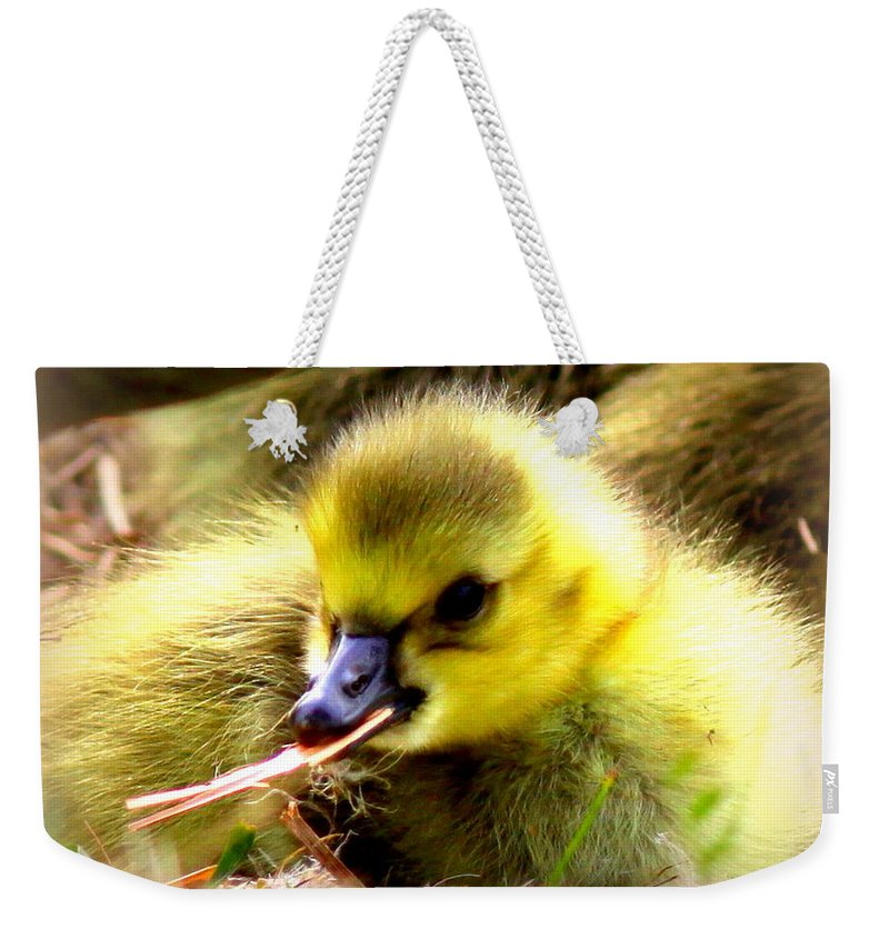 Canada Goose Weekender Tote Bag featuring the photograph 0983 - Canada Goose by Travis Truelove