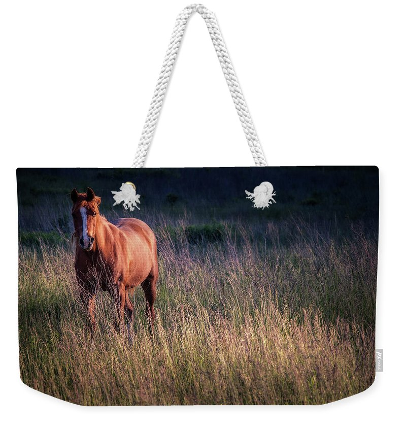 Animal Weekender Tote Bag featuring the photograph Pretty Girl 2 by Jeff Sebaugh