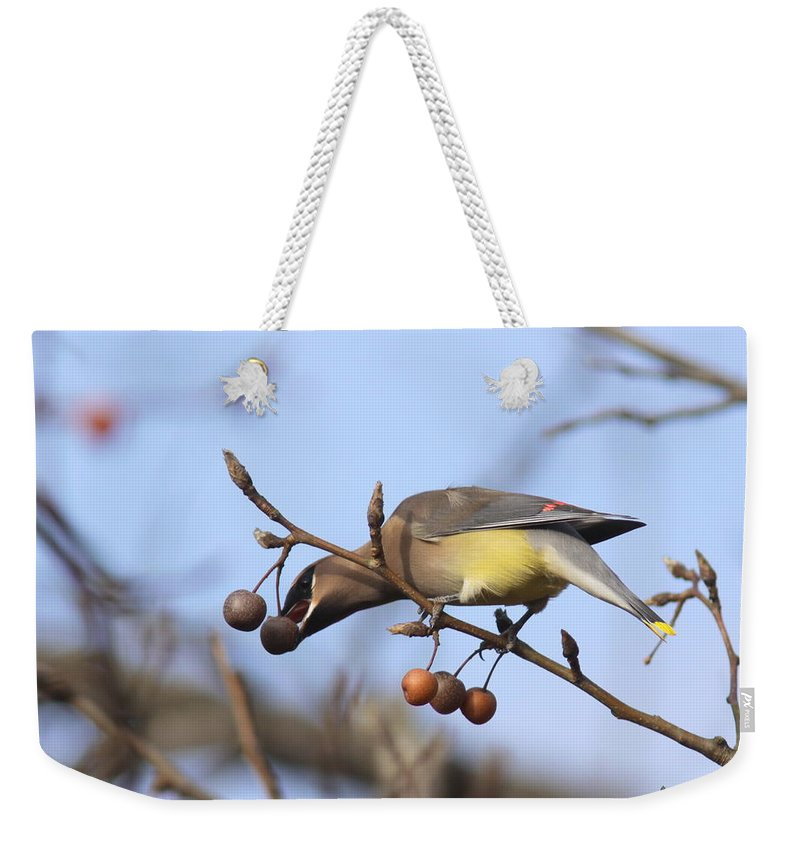 Cedar Waxwing Weekender Tote Bag featuring the photograph 4427 - Cedar Waxwing by Travis Truelove