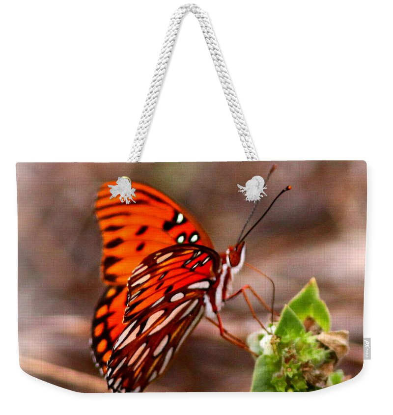 Butterfly Weekender Tote Bag featuring the photograph 4534 - Butterfly by Travis Truelove