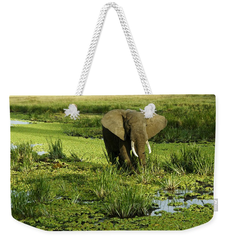 Africa Weekender Tote Bag featuring the photograph African Elephant In Swamp by Michele Burgess