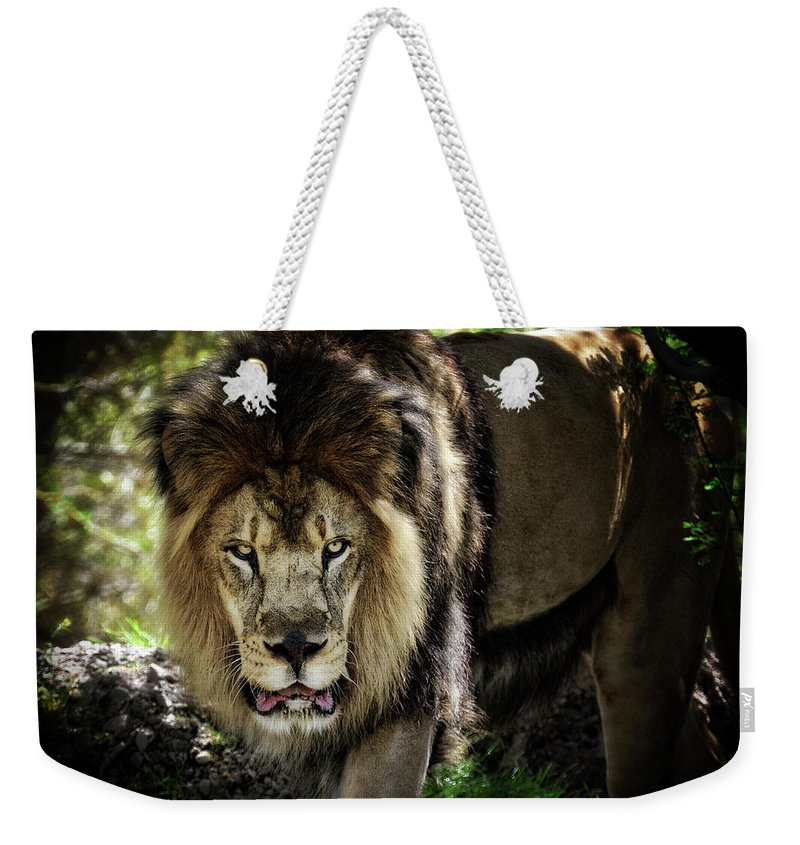 African Lion Weekender Tote Bag featuring the photograph African Lion by Saija Lehtonen