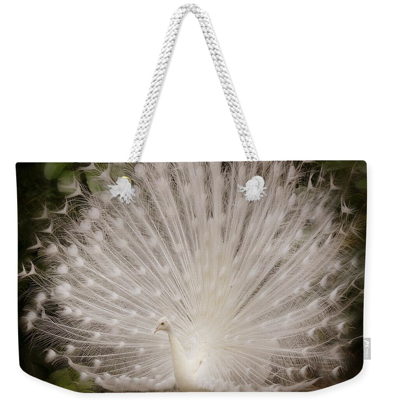 Albino Peacock Weekender Tote Bag featuring the photograph Albino Peacock by Joseph G Holland