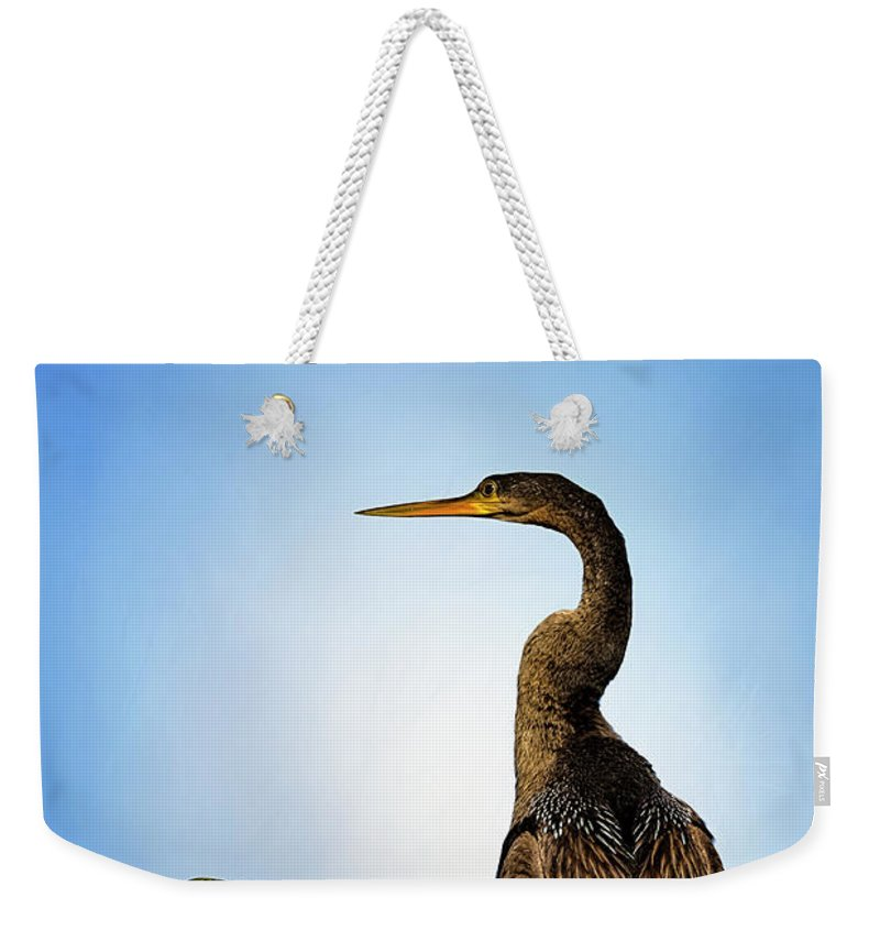 Florida Weekender Tote Bag featuring the photograph Anhinga by Cyndy Doty