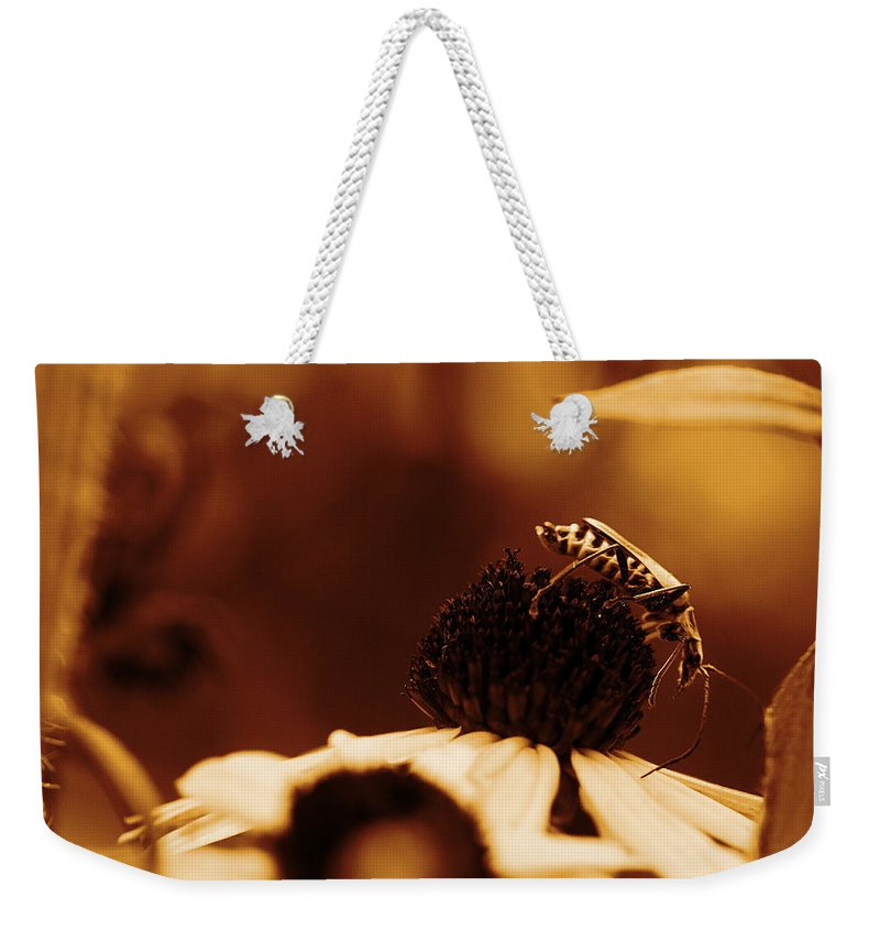 Leatherwing Weekender Tote Bag featuring the photograph Anyone Else Down There - Gold by Angela Rath