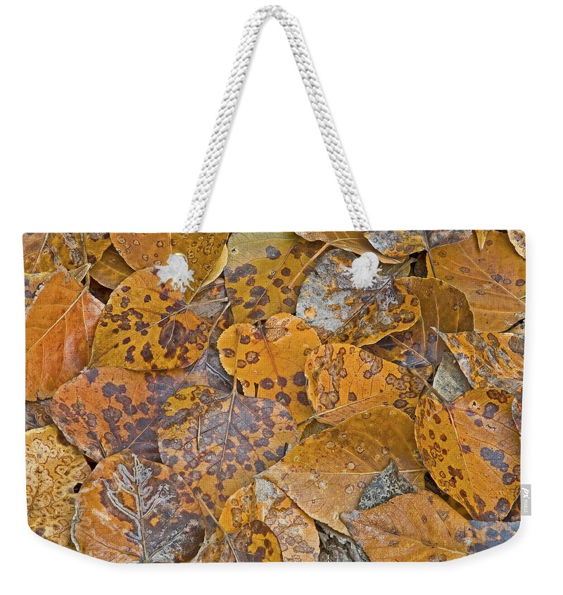 Aspen Leaves Weekender Tote Bag featuring the photograph Autumn Leaves by Darrel Giesbrecht