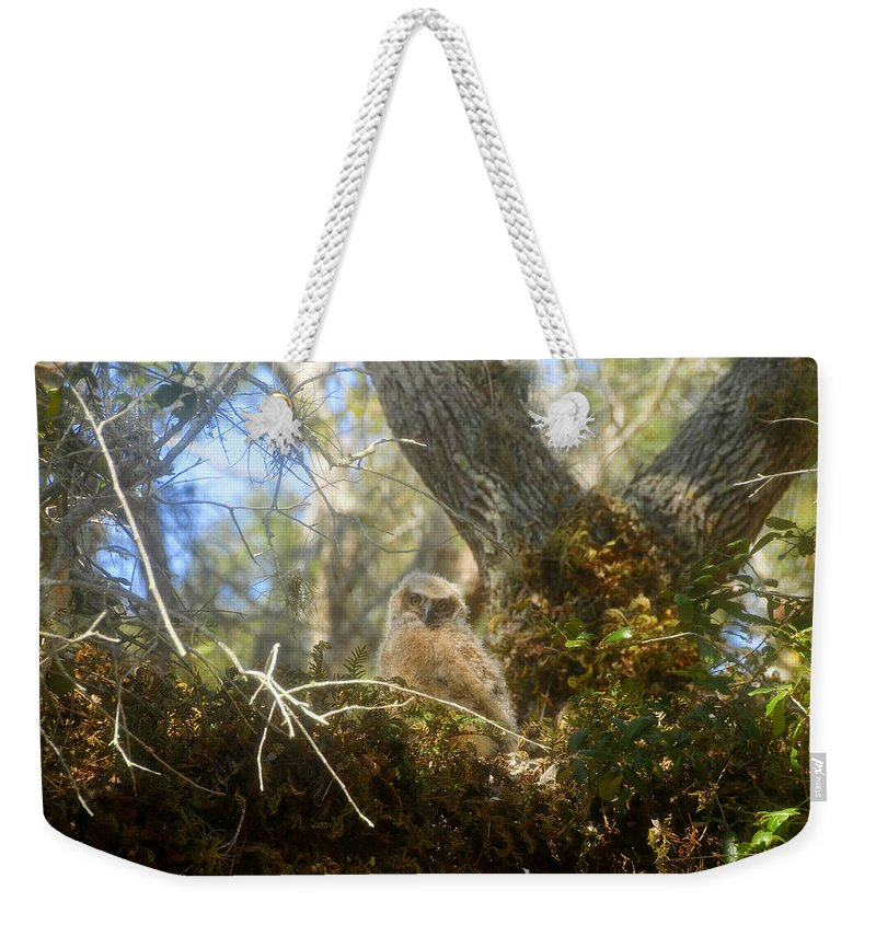 Great Horned Owl Weekender Tote Bag featuring the photograph Babe In The Woods by David Lee Thompson