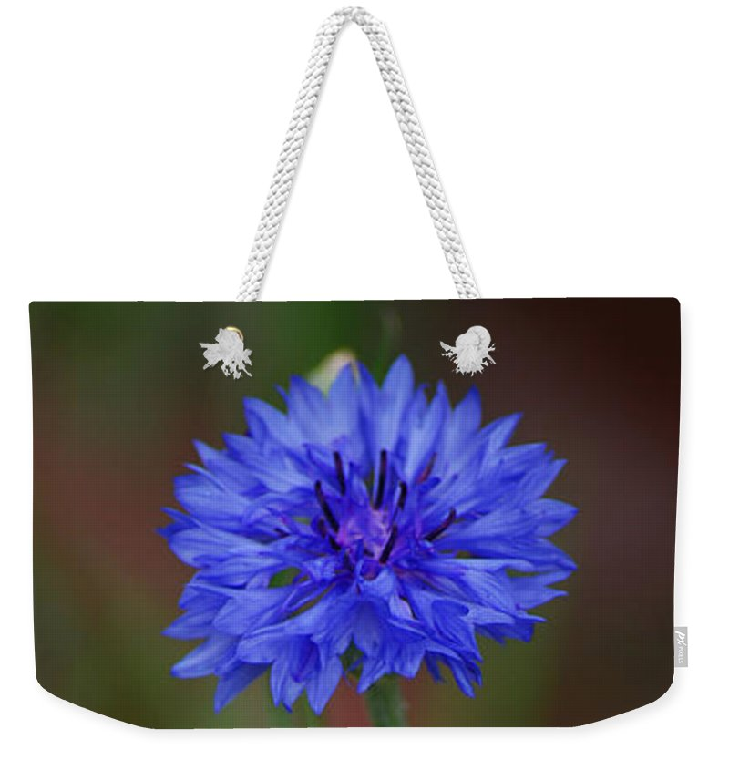 Bachelor Button Weekender Tote Bag featuring the photograph Bachelor Button Blues Lll by Michelle Hastings