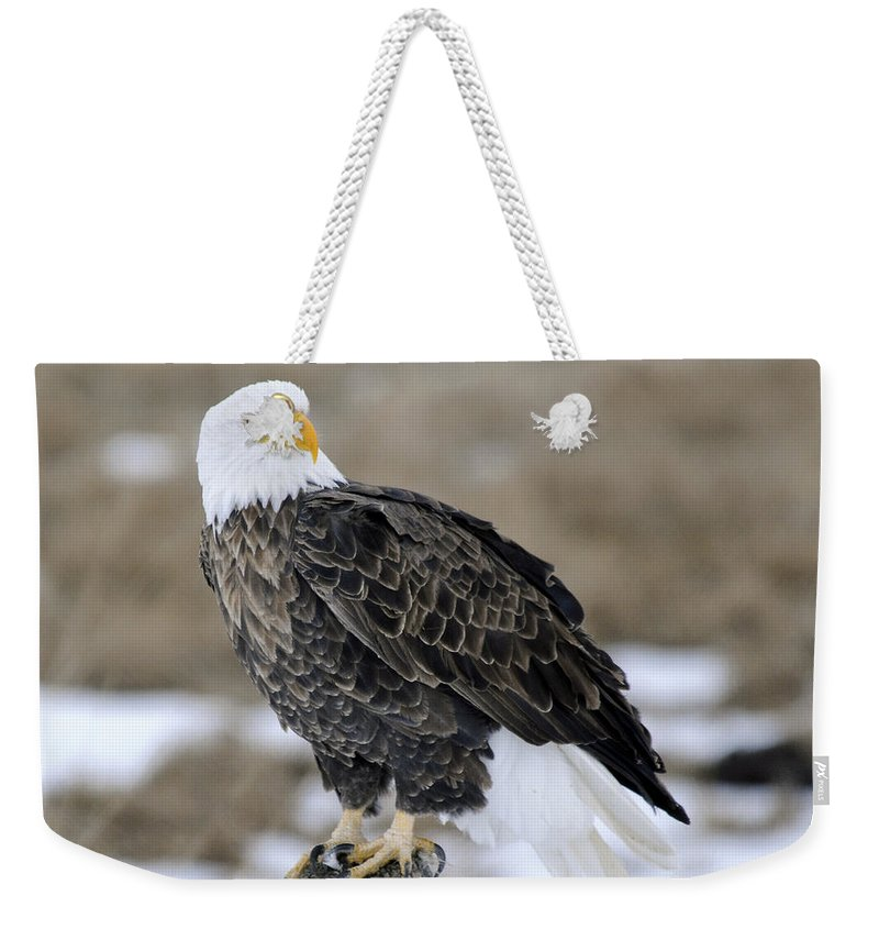 Bald Eagle Weekender Tote Bag featuring the photograph Bald Eagle by Gary Beeler