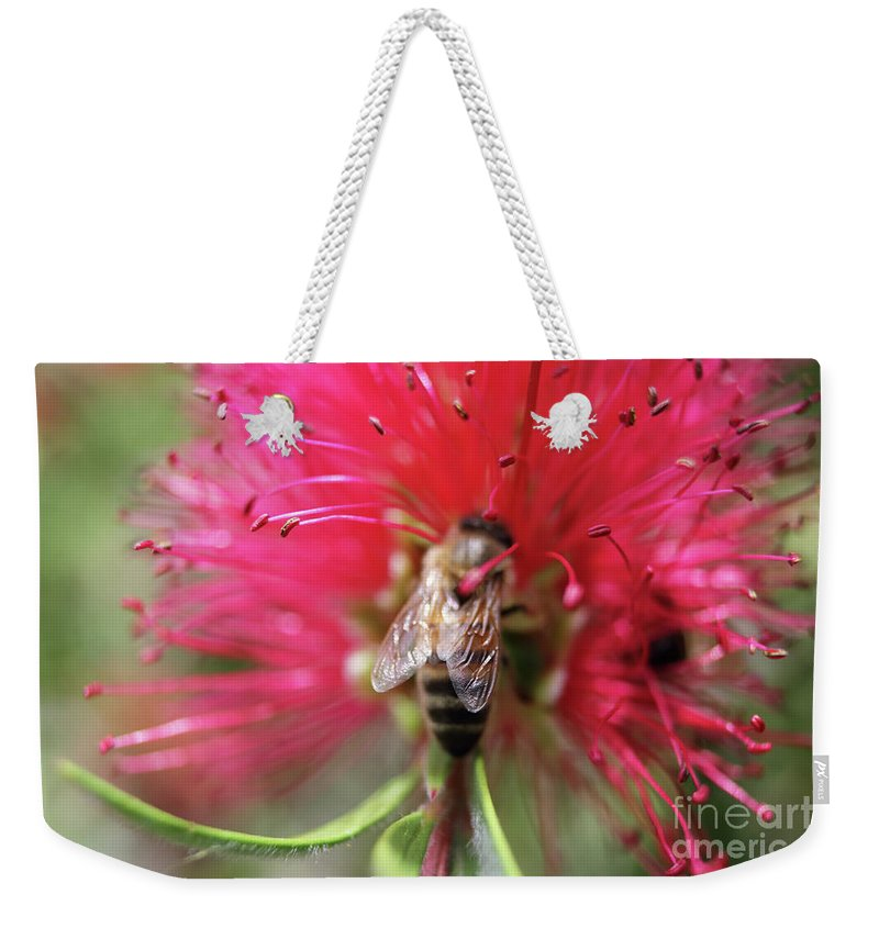 Bee On Bottlebrush Weekender Tote Bag featuring the photograph Bee On Bottlebrush by Julia Gavin