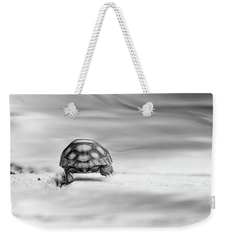 Fairytale Weekender Tote Bag featuring the photograph Big Big World 1 by Laura Fasulo