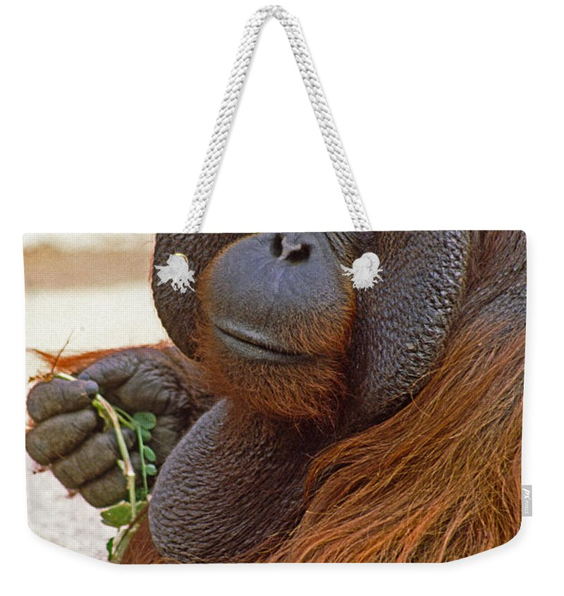 Orangutan Weekender Tote Bag featuring the photograph Big Daddy by Michele Burgess