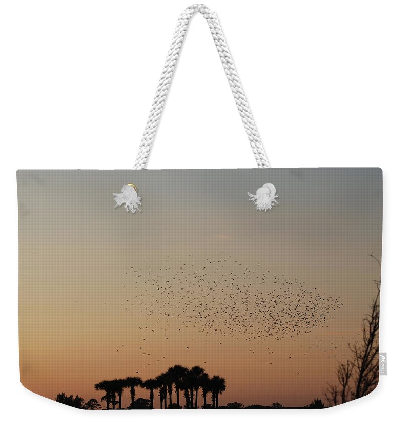Nature Weekender Tote Bag featuring the photograph Birds In The Sun by Rob Hans