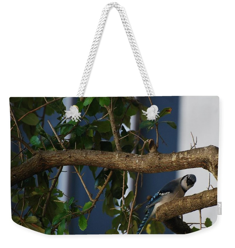 Birds Weekender Tote Bag featuring the photograph Blue Bird by Rob Hans