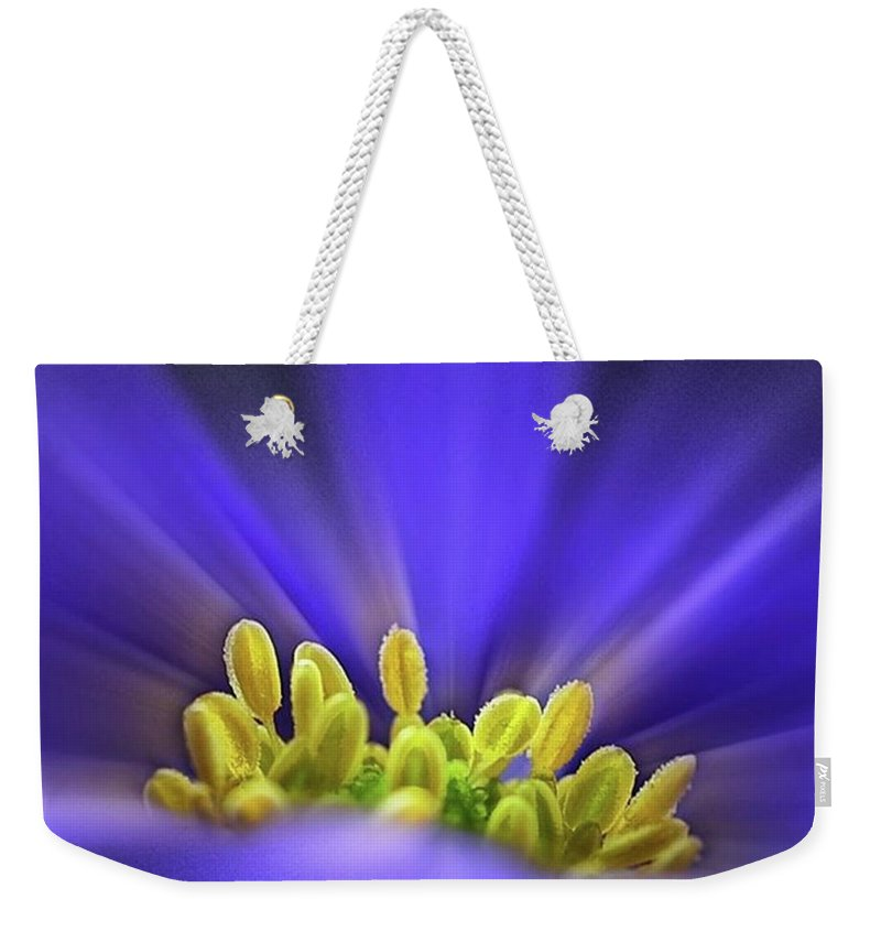 Beautiful Weekender Tote Bag featuring the photograph blue Shades - An Anemone Blanda by John Edwards