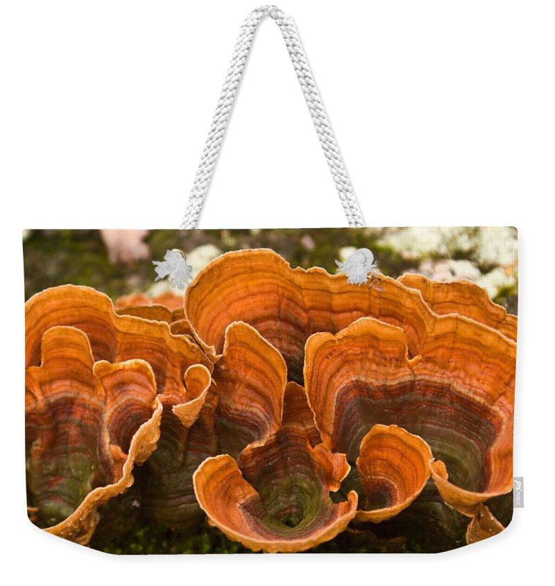 Bracket Weekender Tote Bag featuring the photograph Bracket Fungi by Douglas Barnett