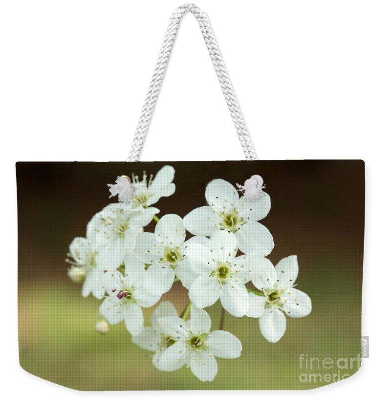 Bradford Pear White Flower Weekender Tote Bag featuring the photograph Bradford Pear Flower by Iris Richardson