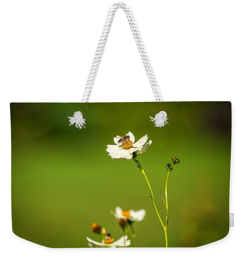 Wales Weekender Tote Bag featuring the photograph Busy Bee by Mark Llewellyn