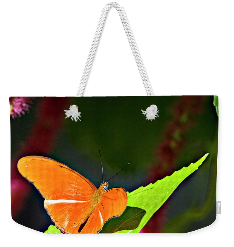 Butterfly Weekender Tote Bag featuring the photograph Butterfly 22 by Walter Herrit