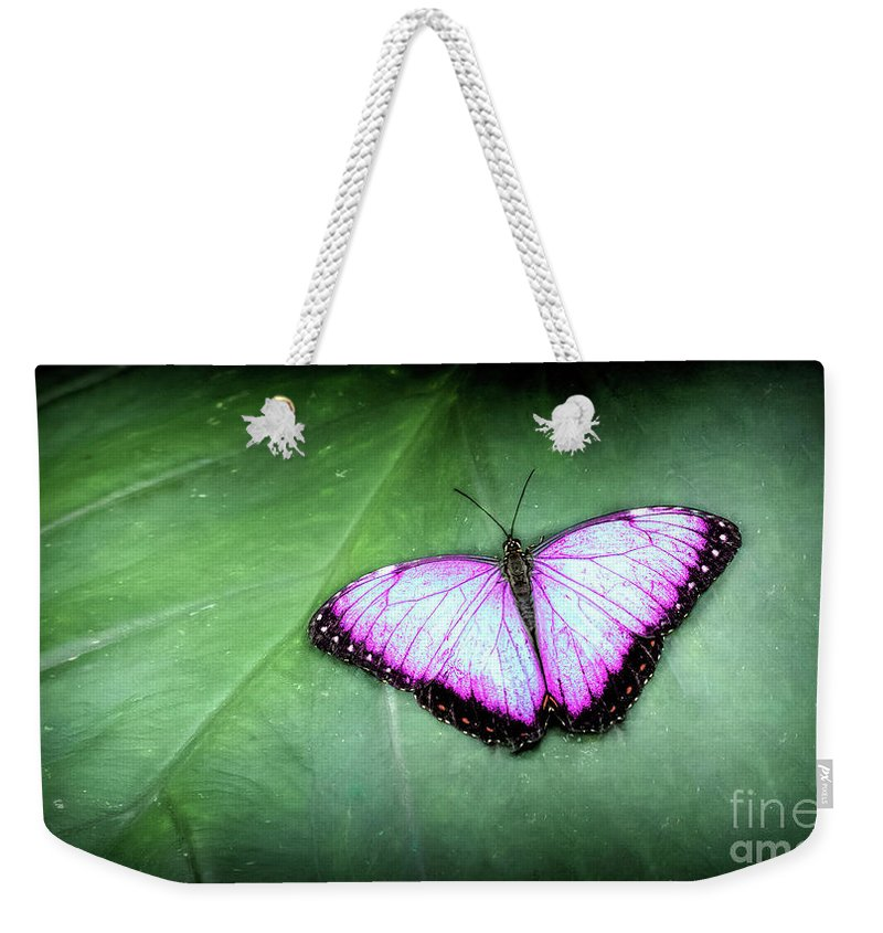 Feeding Weekender Tote Bag featuring the photograph Butterfly by Shaun Wilkinson