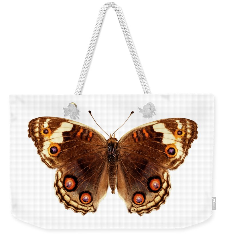 Indonesia Weekender Tote Bag featuring the painting Butterfly Species Junonia Orithya by Pablo Romero