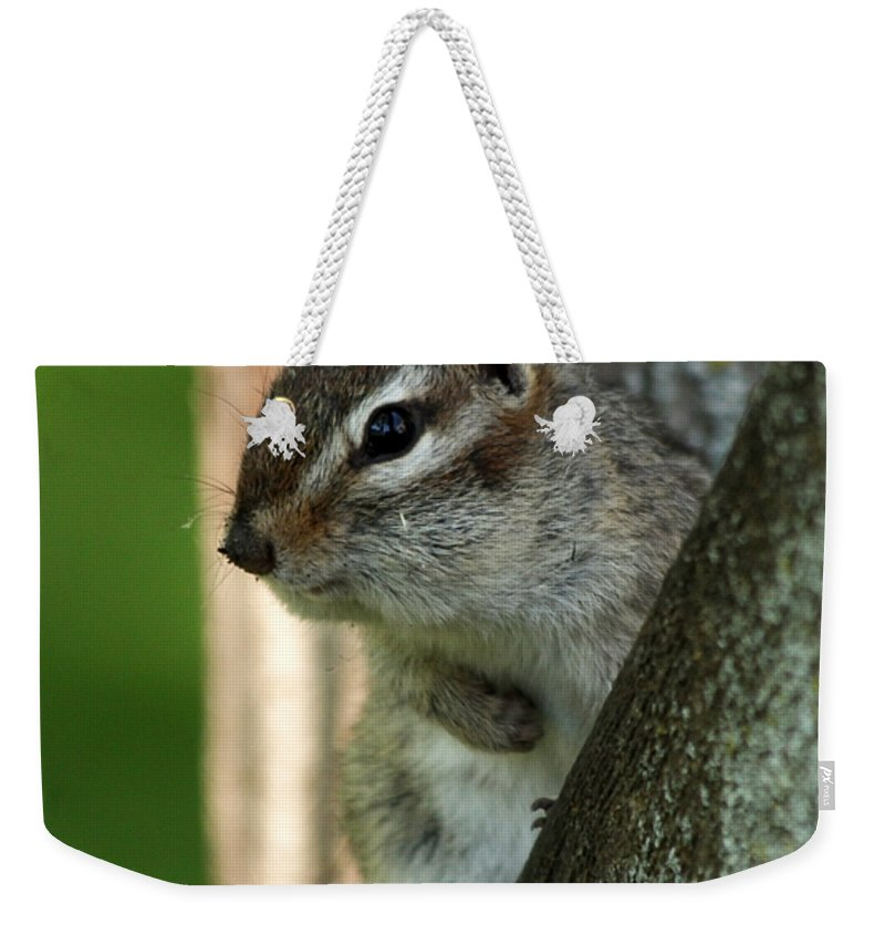 Chipmunk Weekender Tote Bag featuring the photograph Chipmunk by Lori Tordsen
