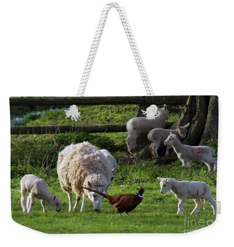Pheasant Weekender Tote Bag featuring the photograph Close Encounter Of The Third Kind by Angel Ciesniarska