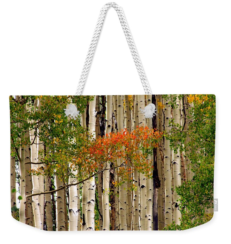 Aspen Weekender Tote Bag featuring the photograph Colorado Aspens by Carol Milisen