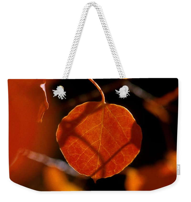 Fall Colors Weekender Tote Bag featuring the photograph Colorado Gold by Jerry McElroy