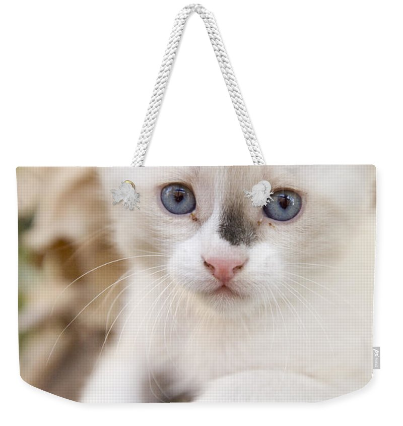 Animal Weekender Tote Bag featuring the photograph Cute 2 Month Old White Kitten by Ian Middleton