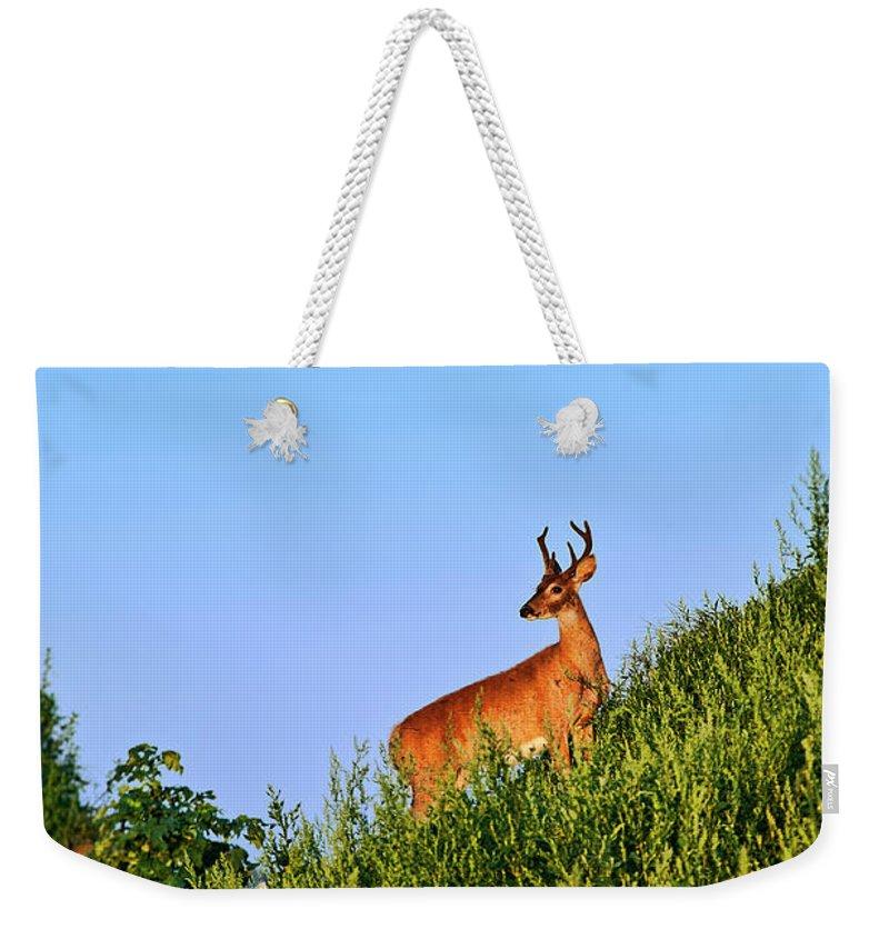 Odocoileus Virginianus Weekender Tote Bag featuring the photograph Deer Buck. by John Greim