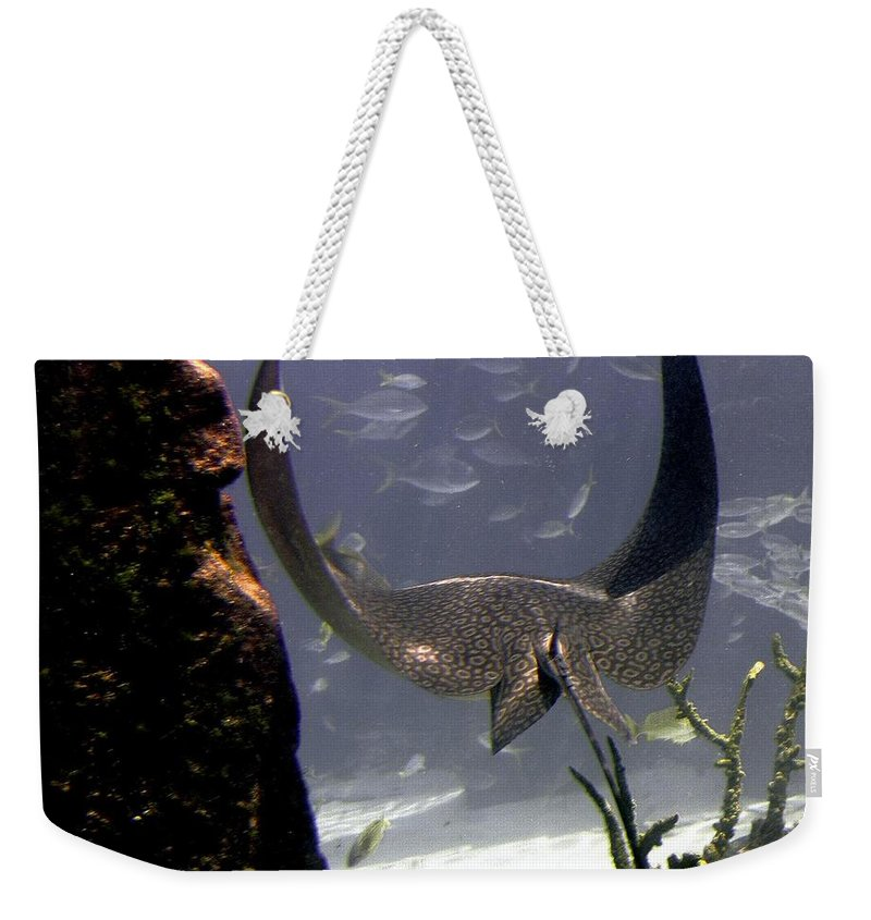 Fish Weekender Tote Bag featuring the photograph Devilray In Paradise by Robert Meanor