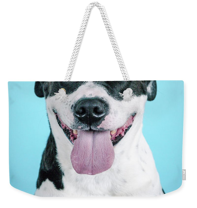 Dogs Weekender Tote Bag featuring the photograph Domino 2 by Pit Bull Headshots by Headshots Melrose