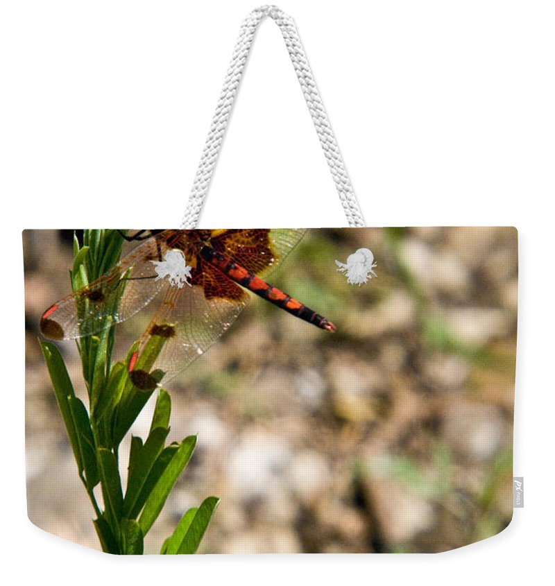 Dragonfly Weekender Tote Bag featuring the photograph Dragonfly Resting by Douglas Barnett