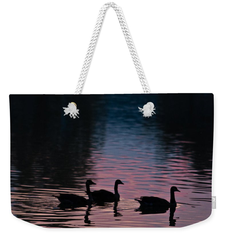 Ducks Weekender Tote Bag featuring the photograph Ducks All In A Row by Douglas Barnett
