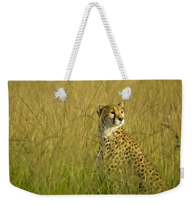 Africa Weekender Tote Bag featuring the photograph Elegant Cheetah by Michele Burgess