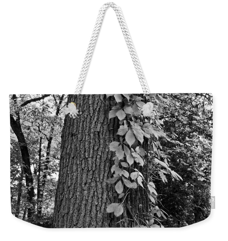 Tree Weekender Tote Bag featuring the photograph Fall Climb by Michiale Schneider