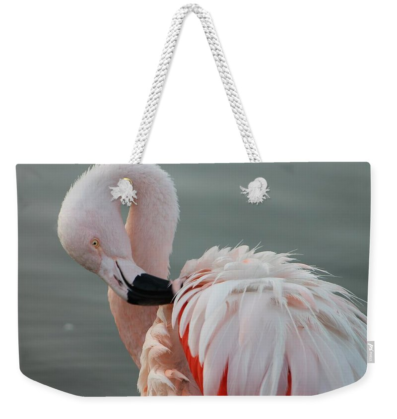 Flamingo Weekender Tote Bag featuring the photograph Flamingo by FL collection