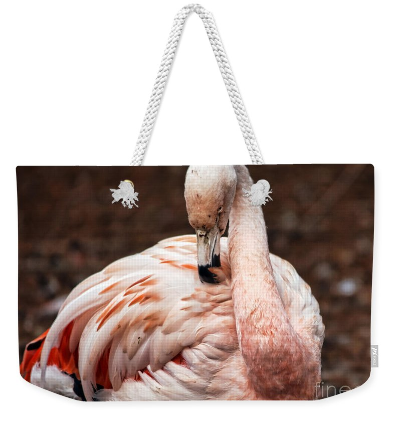 Flamingo Weekender Tote Bag featuring the photograph Flamingo by Gaby Swanson
