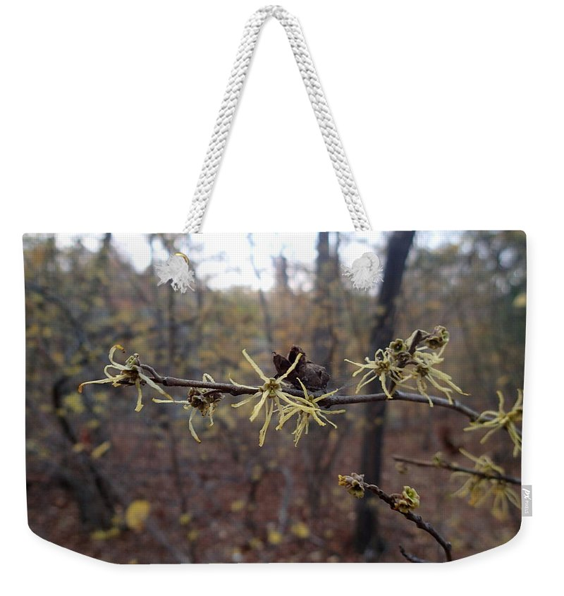 Witch Hazel Weekender Tote Bag featuring the photograph Flower In The Woods by Robert Nickologianis