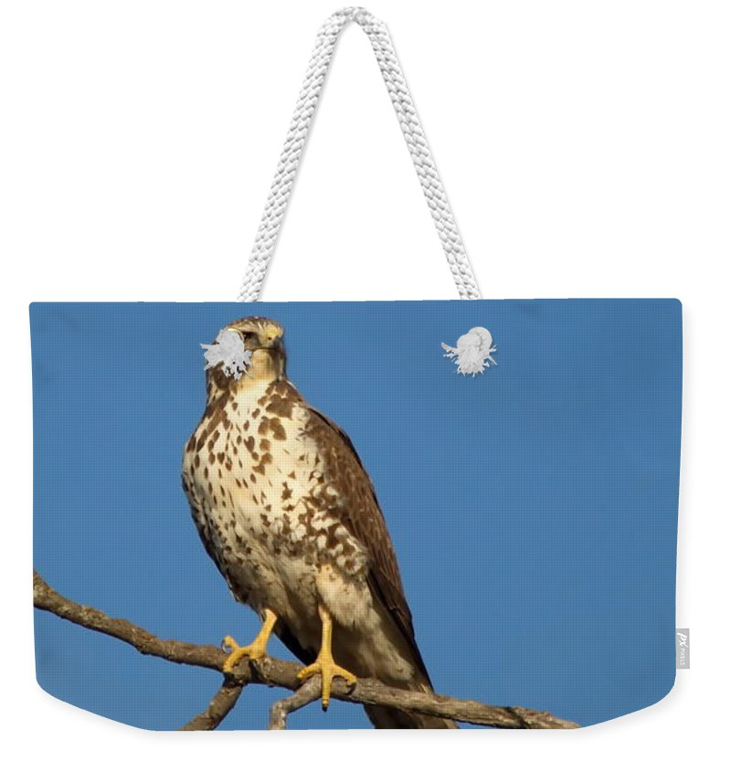 Nature Weekender Tote Bag featuring the photograph Get My Good Side by Crystal Massop
