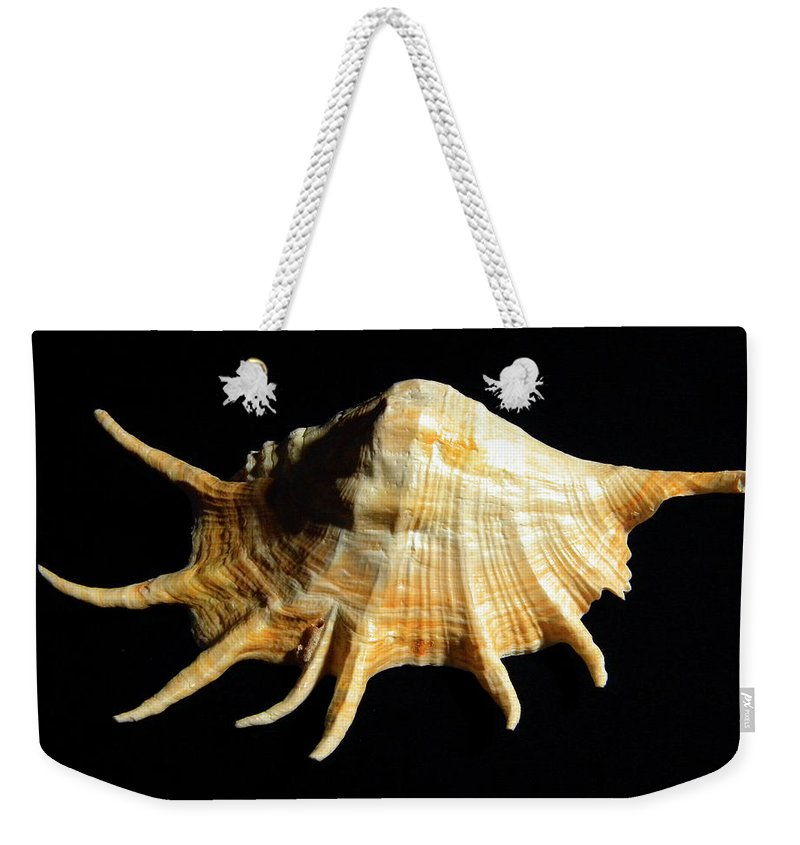 Lambis Truncata Weekender Tote Bag featuring the photograph Giant Spider Conch Seashell Lambis Truncata by Frank Wilson