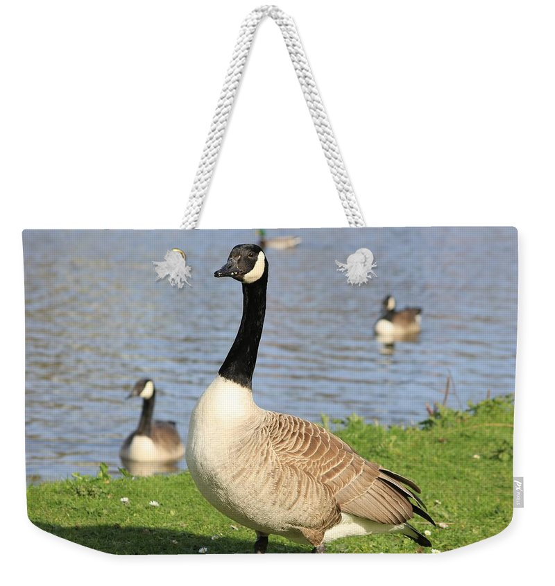 Goose Weekender Tote Bag featuring the photograph Goose by FL collection